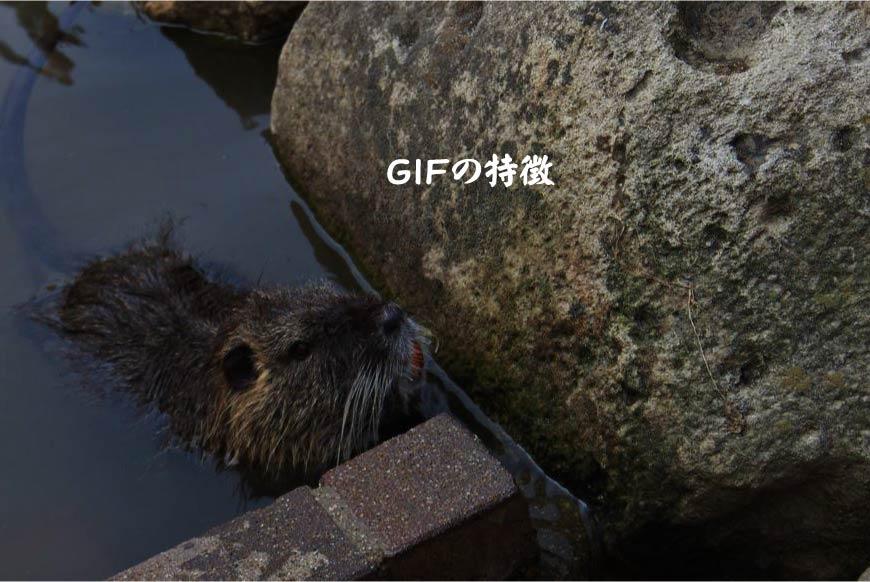 GIFの特徴 ホームページ制作・Web制作