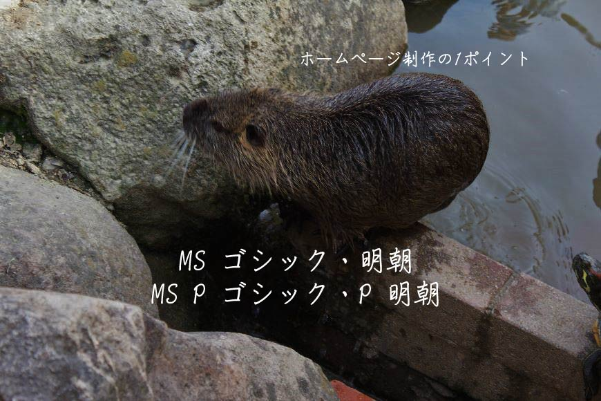 MS ゴシック・明朝 MS P ゴシック・P 明朝 ホームページ制作・Web制作