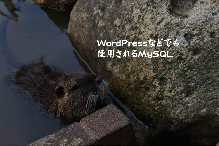 WordPressなどでも使用されるMySQL