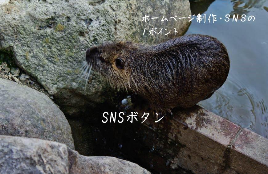 SNSボタン ホームページ制作 Web制作 SEO