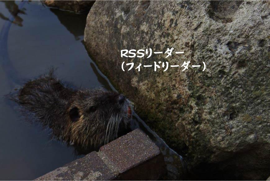RSSリーダー(フィードリーダー)ホームページ制作・SEO