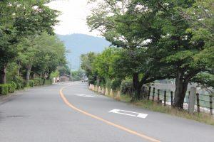 一条通広沢池沿い 京都市右京区