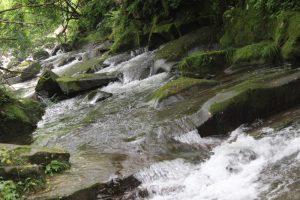 猿尾滝付近の清流