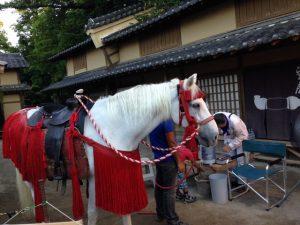 映画村の馬