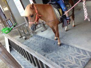 映画村の小さな馬