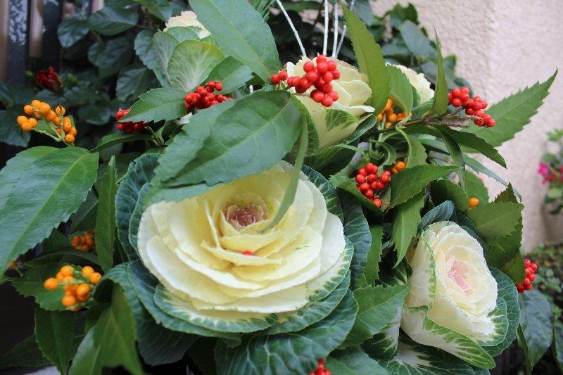 生け花 葉牡丹と二色の千両