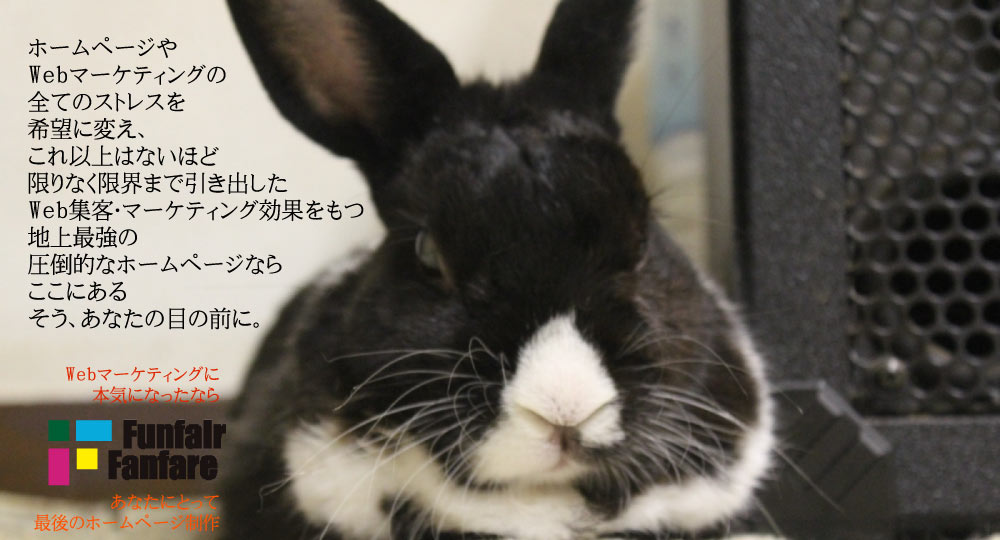 WordPressサイト Lapid Rabbit DUTCHの特長