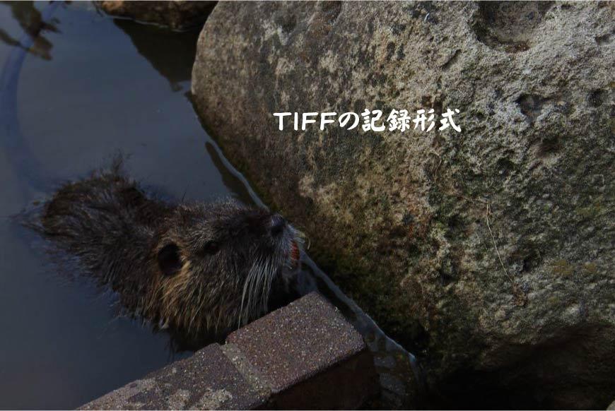 TIFFの記録形式