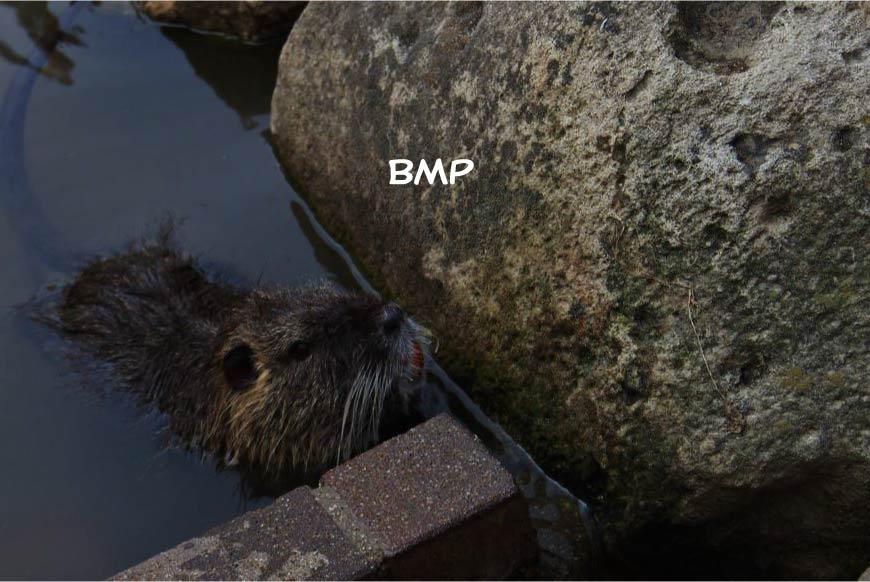 BMP ホームページ制作・Web制作