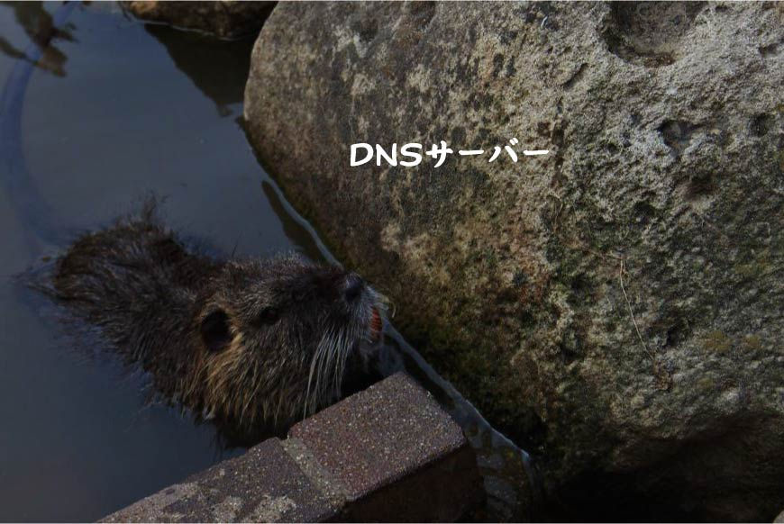 DNSサーバー ホームページ制作・Web制作