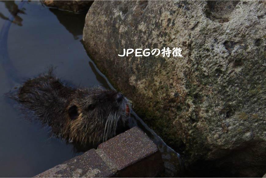 JPEGの特徴 ホームページ制作・Web制作