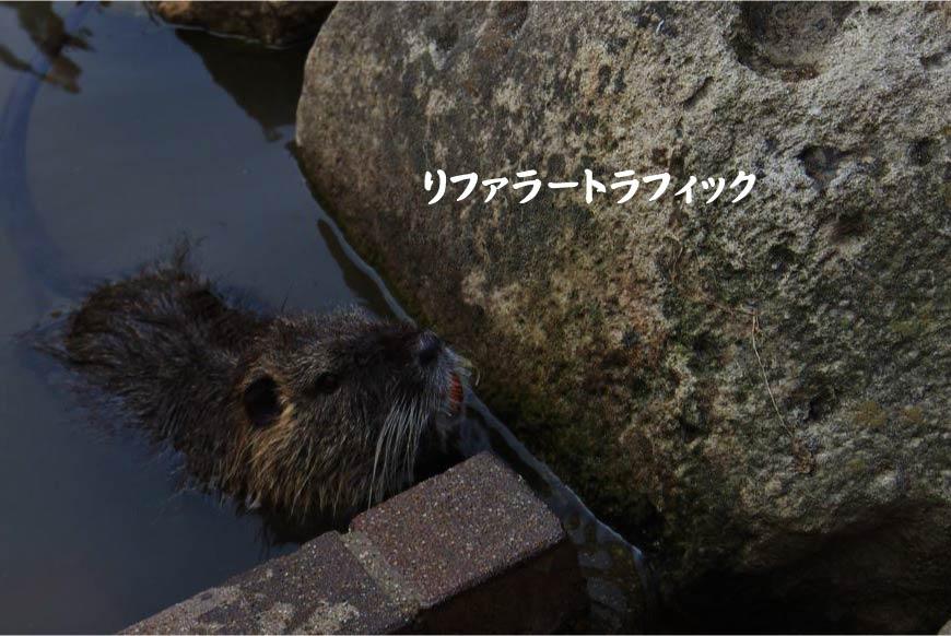 リファラートラフィック ホームページ制作・SEO