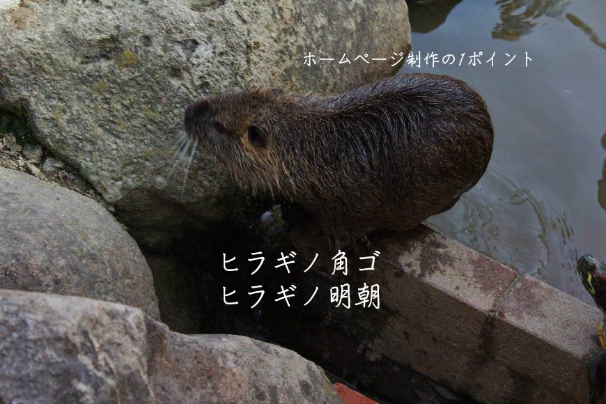 ヒラギノ角ゴ・ヒラギノ明朝 ホームページ制作・Web制作