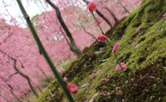 ホームページ制作 京都 ファンフェアファンファーレ 3周年