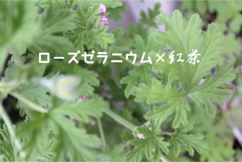 ローズゼラニウム×紅茶