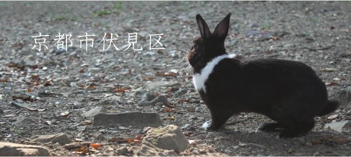京都市伏見区