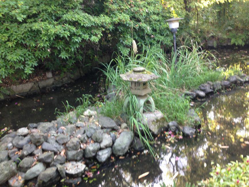 神泉苑脇の池