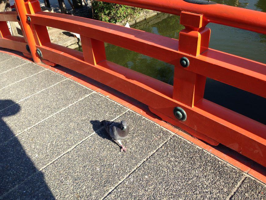 法成橋の上にいた鳩
